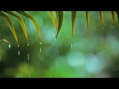 Relaxing music with soft rain that can be described as relaxing piano music, sleep music, peaceful music and romantic music. Instrumental music composed by . Rain Music, Yoga Music, Music Guitar, Music Music, Sound Of Rain, Rain Sounds, Mode Yoga, Relaxing Songs, Om Meditation