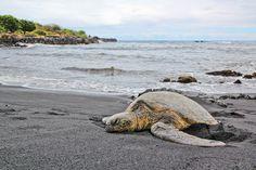 Punalu'u Beach Park - MUST GO SEE TURTLES!!!!!!!!!!