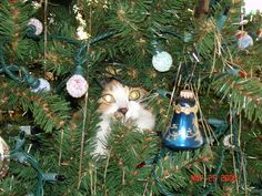 Callie hidden in the tree