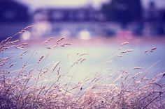 Free Cross Processing Photoshop Action #photoshop #photography