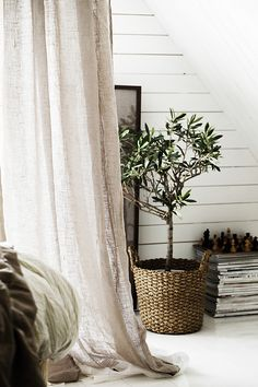 3 Fascinating Tips: Natural Home Decor Diy Awesome natural home decor inspiration bedrooms.Natural Home Decor Rustic Branches all natural home decor floors.Natural Home Decor Rustic Window. Natural Homes, Natural Home Decor, Feng Shui, Indoor Olive Tree, Black Olive Tree, Olive Green, Growing Olive Trees, Design Scandinavian, Large Indoor Plants