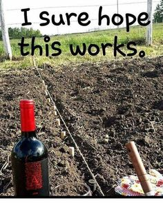 Weekend gardening project wine humor wineglasswriter meme is part of Wine jokes - Wine Jokes, Wine Meme, Wine Funnies, Funny Wine, Wine Signs, Coffee Wine, Drinking Quotes, Wine Wednesday, In Vino Veritas