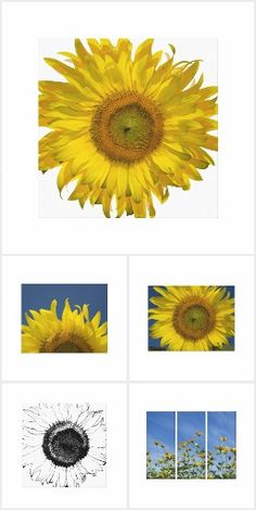 These pretty Sunflower Wrapped Canvas Prints make great gift ideas for a flower lover, gardener or florist! Each art print features a floral photograph of blooming sunflower blossoms. Sunflower Gifts, Wall Art Prints, Canvas Prints, Floral Photography, White Elephant Gifts, Sunflowers, Blossoms, Wrapped Canvas