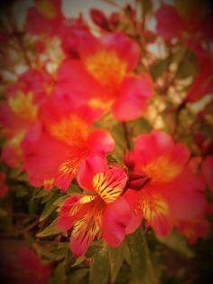 """Há flores…flores e flores! Agora que estamos na Primavera, embora o Inverno teime em querer ficar…descobri nas minhas navegações na """"net"""", um artigo sobre uma empresa famili…"""