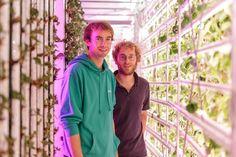 En plein coeur de Paris, des agriculteurs d'un nouveau genre font pousser des fraises dans des containers.