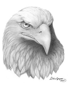 Drawing-Eagle Head