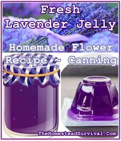 This Fresh Lavender Jelly Homemade Flower Recipe is a delicious delicate flavored sweet spread with a beautiful Periwinkle Purple color. Summer is in full Pressure Canning Recipes, Canning Tips, Pressure Cooking, Jelly Recipes, Jam Recipes, Cooker Recipes, Recipies, Survival Food, Homestead Survival
