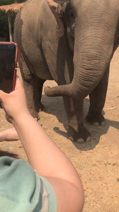 Read on for more animal experiences to add to your must-do-in-this-lifetime list. Elephant Gif, Cute Baby Elephant, African Elephant, Elephant Videos, Baby Elephants, Elephants Photos, Funny Animal Memes, Cute Funny Animals, Cute Baby Animals