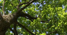 The Montessori Tree - Trillium Montessori Montessori Education, Montessori Classroom, Primary Education, American Montessori Society, Educational Leadership, Educational Technology, Motor Planning, Physics And Mathematics, Parent Teacher Conferences