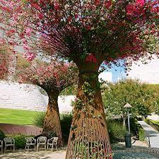 Resultado de imagen para j paul getty museum garden
