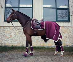 isnt this #instapic from @scarlett_equinelife just unreal?! Eskadron Platinum Blackberry Saddlepad Velvet Crystal Allround boots Over reach boots Fauxfur Gorgeous Jersey Stripe rug Pic credit to @eschreinerphotography