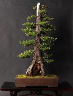 Além de encorajar a paciência, aliviar o estresse e ajudar a purificar o ar, árvores de Bonsai são lindas