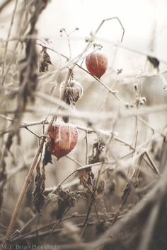 Soft Autumn, Autumn Nature, Autumn Day, Fall, October Country, Nature View, Soft And Gentle, Seed Pods, Months In A Year