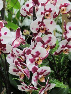 floriades serre tropicale