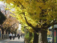 Yasukuni Dori