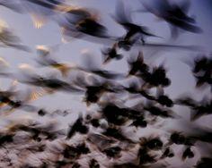 "Image Spark - Image tagged ""motion"", ""flying"", ""flight"" - bdale"