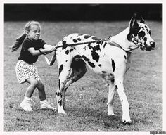 Reminds me of walking my Great Dane when I was a kid, usually I was on rollerblades!