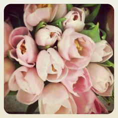 pale. pink. tulips.