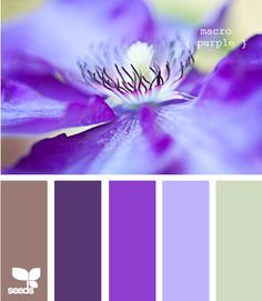 1000 images about color combinations purple brown on - Brown and violet combination ...