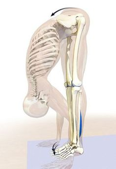 Yoga Poses & Workout : Using the big toes in uttanasana. Yoga Fitness, Fitness Tips, Fitness Motivation, Health Fitness, Life Motivation, Fitness Workouts, Autogenic Training, Yoga Teacher Training, Pilates