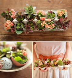 DIY succulent gardens in egg cartons - lovely! By Le Robin's Nest. #DIY