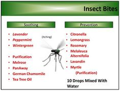 Insect Bites Young Living Essential Oils Connect with me at www.fb.com/TheWholeLifeYL