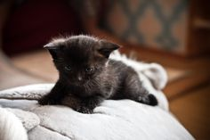 50 Beautiful And Cute Cat Pictures   A House of Fun