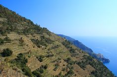 Trail N. 6d from Volastra to Case Pianca takes you right through the Cinque Terre vineyards, with great views of Manarola and Corniglia