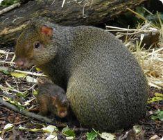 55 Best Costa Rica Fauna Images Animales Animals Beautiful