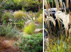 bujne trawy ozdobne