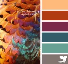 color schemes with peacock blue and copper - Google Search