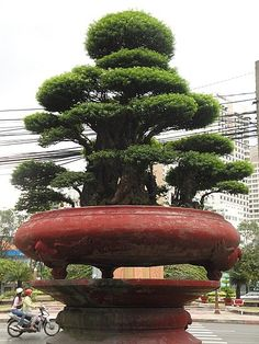 Google Image Result for http://images.travelpod.com/users/hilaryramsey/3.1253195132.a-300-year-old-bonsai.jpg