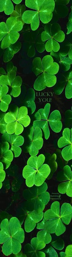 Happy St Patrick's Day To Alll