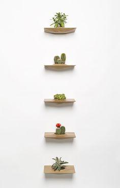 Little Succulents - Pequeñas suculentas (like the shelves) Small Plants, Air Plants, Indoor Plants, Plant Wall, Plant Decor, Plant Pots, Scandi Living, Cactus Plante, Diy Hanging Shelves