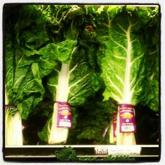 First you Juice it... Green Chard  Photo by raydoustdar