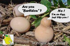 Barbidou strange egg des Barbapapa - DZprod Jardin - 28 juillet 2016