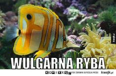 Wulgarna ryba Animal Memes, Funny Animals, Funny Memes, Jokes, Funny Comics, Lol, Humor, Pets, Anime