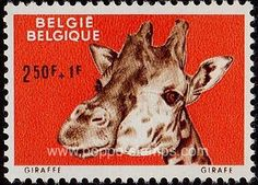 Poppe Stamps: Belgium, 1961, 1781, Giraffes, Association Or Organization, Animals, Funds, Zoo - stamps for sale by theme and country