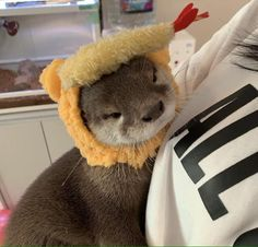 this is a dog yeah yeah Otters Cute, Cute Ferrets, Baby Otters, Cute Cats, Pretty Animals, Cute Little Animals, Cute Funny Animals, Fluffy Animals, Animals And Pets