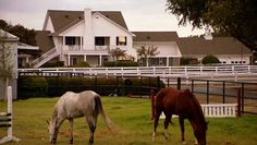 """"""" Peaceful day at SF Ranch. Evn the ponys are waiting 4 the Ewings 2 return Southfork Ranch, South Fork, Old Tv Shows, New Series, Dallas, The Originals, House, Ideas, Home"""