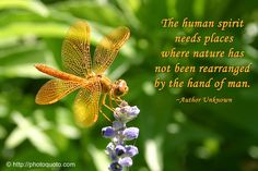 Where do you draw inspiration from? What is your favorite/signature design? Please continue reading this post for my dragonfly mani and where my inspiration came from. Do share yours too please by leaving some love in the comments section. Enjoy your day! Dragonfly Symbolism, Dragonfly Meaning, Dragonfly Quotes, Poems Beautiful, Beautiful World, Butterfly Poems, Funeral Poems, Memorial Poems, Quotes About Motherhood