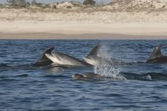 Dolphin watching Catamaran Sado estuary - Go Discover Portugal travel