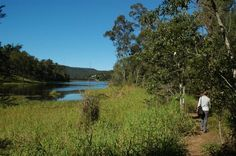 Woman walking on Araucaria circuit track in Brisbane Forest Park next to the Enoggera Reservoir in The Gap
