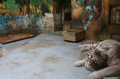 Bratislava ZOO is one of the largest ZOOs in Slovakia. If you have some spare time, want to spend a relaxed day somewhere nice or just love animals, then th Zoos, Bratislava, Painting, Animals, Art, Art Background, Animales, Animaux, Painting Art