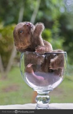 Care for a cup of sloth?
