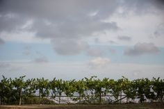 Vineyards in Catalonia, just some of what we talk about on our Barcelona Wedding blog, called Moments #wedding #barcelona