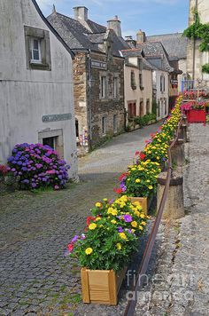 A Line Of Flowers In A French Village, Provence. Photograph France