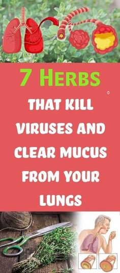 Remedies Natural 7 Herbs That Kill Viruses And Clear Mucus From Your Lungs. - AWe are getting sicker and sicker. Mentally, bodily and emotionally and they are all intertwined. Herbs That Kill Viruses and Clear Mucus from Lungs Holistic Remedies, Natural Home Remedies, Health Remedies, Cold Remedies, Herbal Remedies, Healing Herbs, Medicinal Plants, Natural Medicine, Herbal Medicine