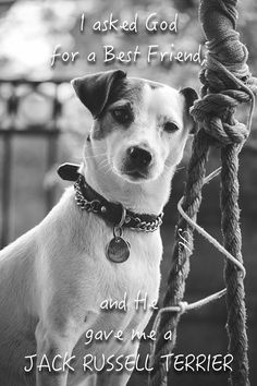 Jack Russell Terrier Isis Maria S. by Heavenly