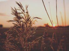 # Sunsets